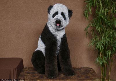 poodle-panda